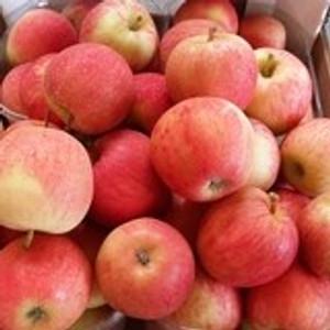 תפוח עץ גאלה - אורגני -מקומי