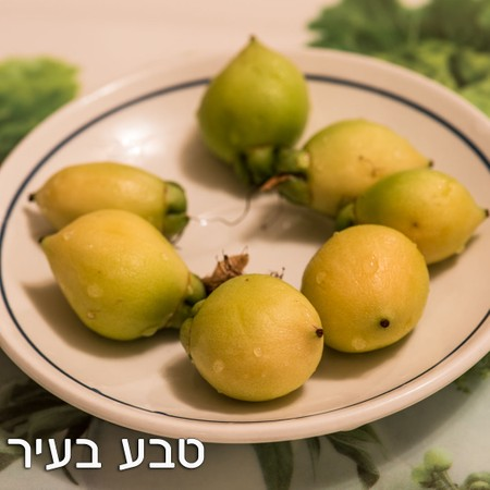 תפוח הורד - ללא ריסוס